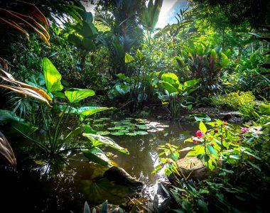 Endless forms most beautiful: strolling through Laos' first botanic gardens