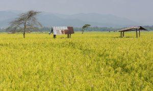 (English) Life & Nature in Luang Namtha
