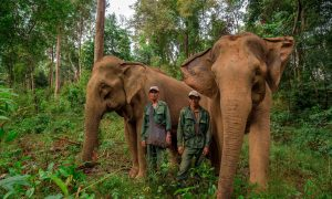 The Elephant Conservation Center