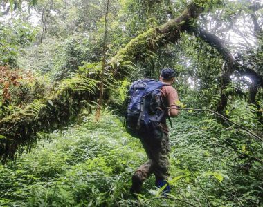 Linking Travel with Wildlife Conservation