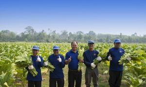 Supporting Livelihoods in Agriculture